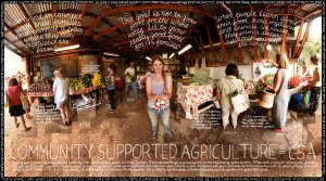 lexicon-of-sustainability-community-supported-agriculture-csa