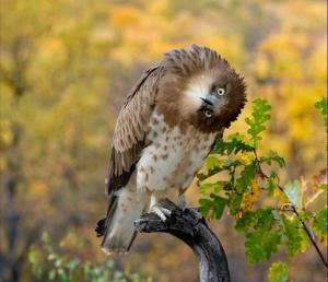 Owl with Head Twisted