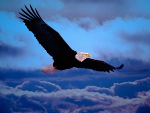 Download-Flying-Eagle-Dramatic-Sky-Iphone-Backgrounds