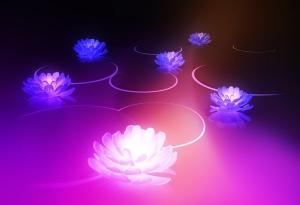 lotusflowers